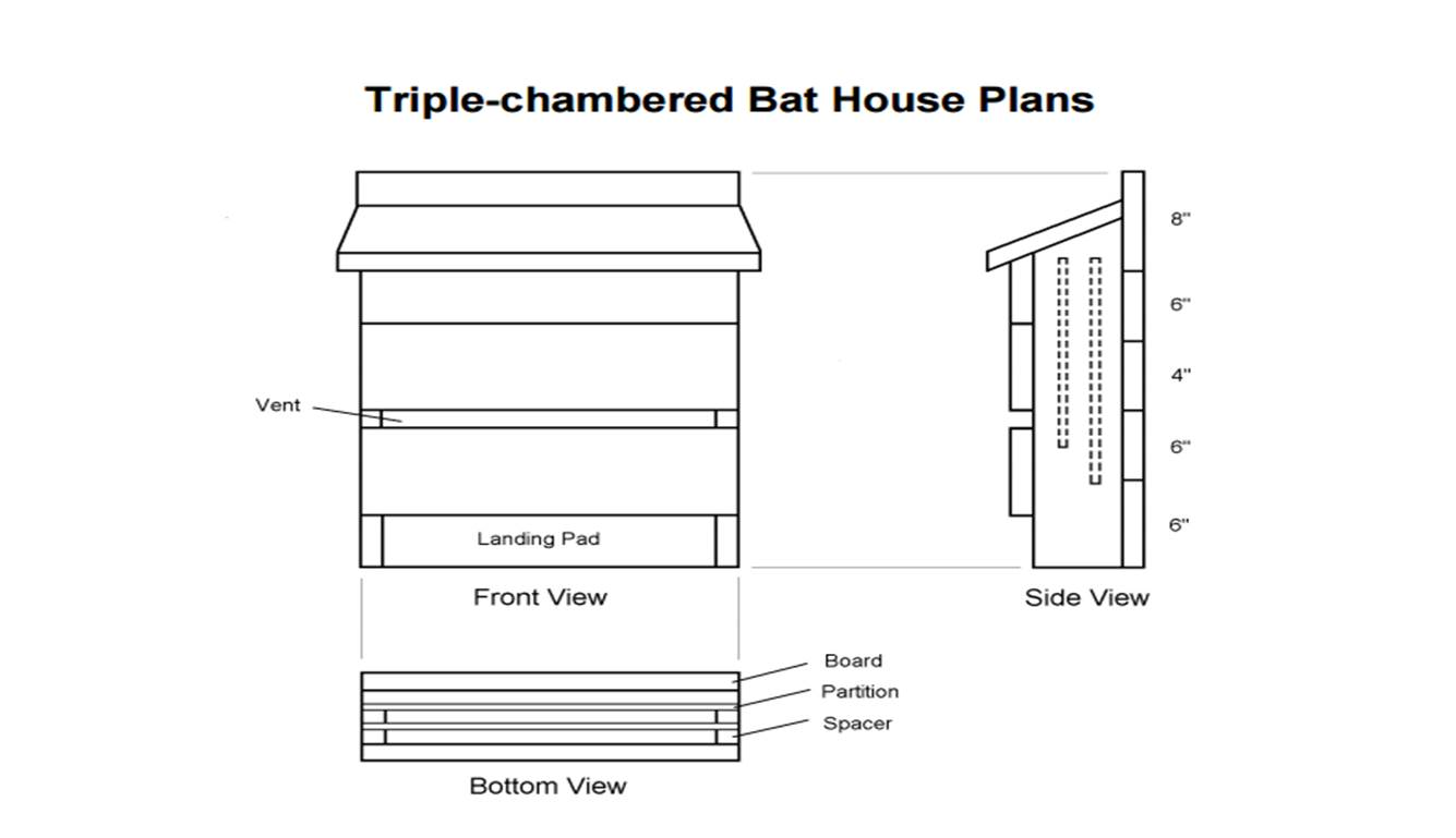 How to make a bat house get rid of those bugs insects for How to get building plans for your house