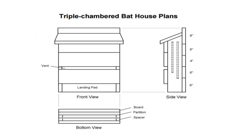 florida bat house plans
