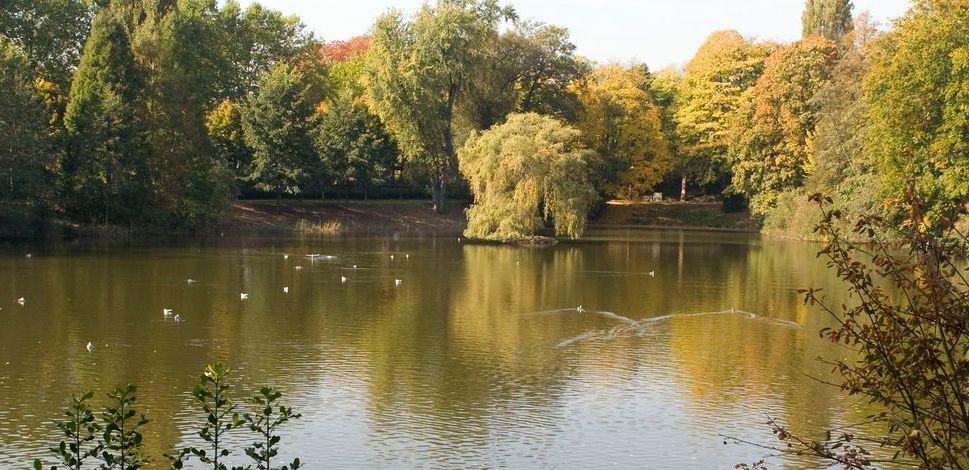 Der Weiher im Ostpark (Foto: Stadt Düsseldorf)