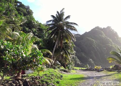 Grand Rivère: Endstation für das Auto, Start für eine tolle Wanderung auf Martinique