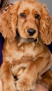 כלב לילדים,צילום גלעד בר שלו