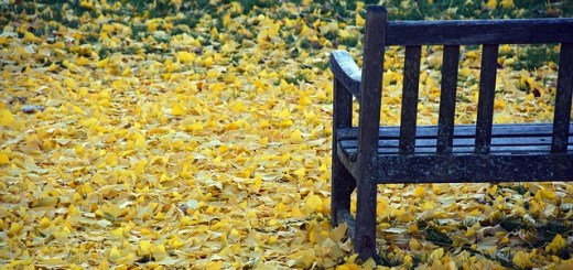 image of an empty park bench surrounde by yellow fallen leaves.