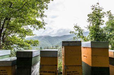 e'-ancora-possibile-salvare-le-api-the-mag-fotografia-matteo-bianchi (14)