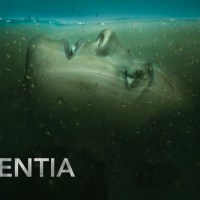 Third-episode verdict: Absentia (AXN)