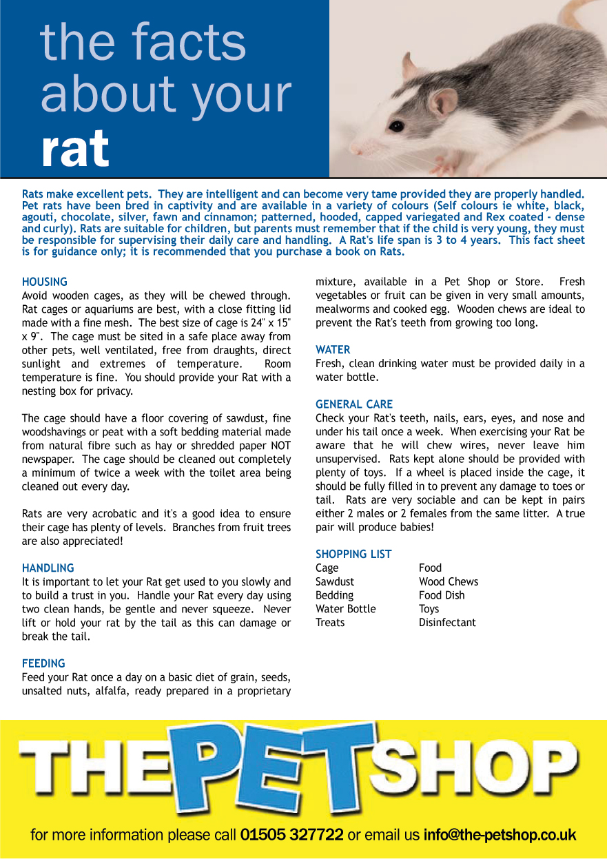 rat care sheet nede whyanything co