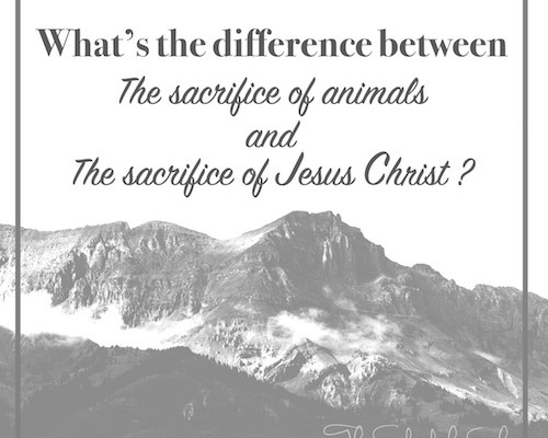 sacrifice of Jesus Christ, sacrifice of animals