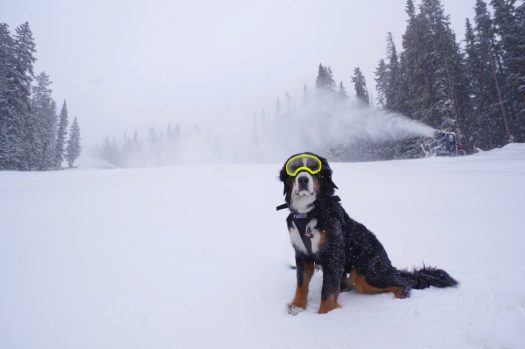 Loveland Ski Area - Powder Dogs, Powder Alliance. Several new resorts join the Powder Alliance for 2018-19 ski season: