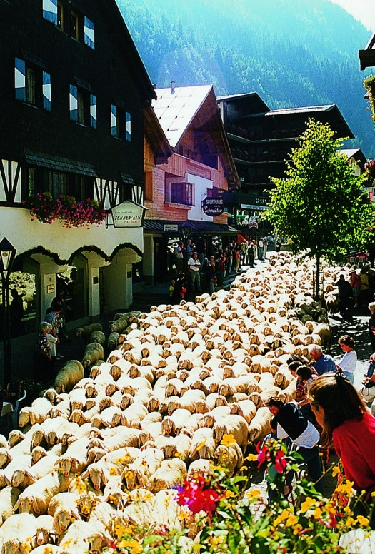 Lots of wool runs through the annual Schaftrieb through St. Anton am Arlberg Picture credits: TVB St. Anton am Arlberg