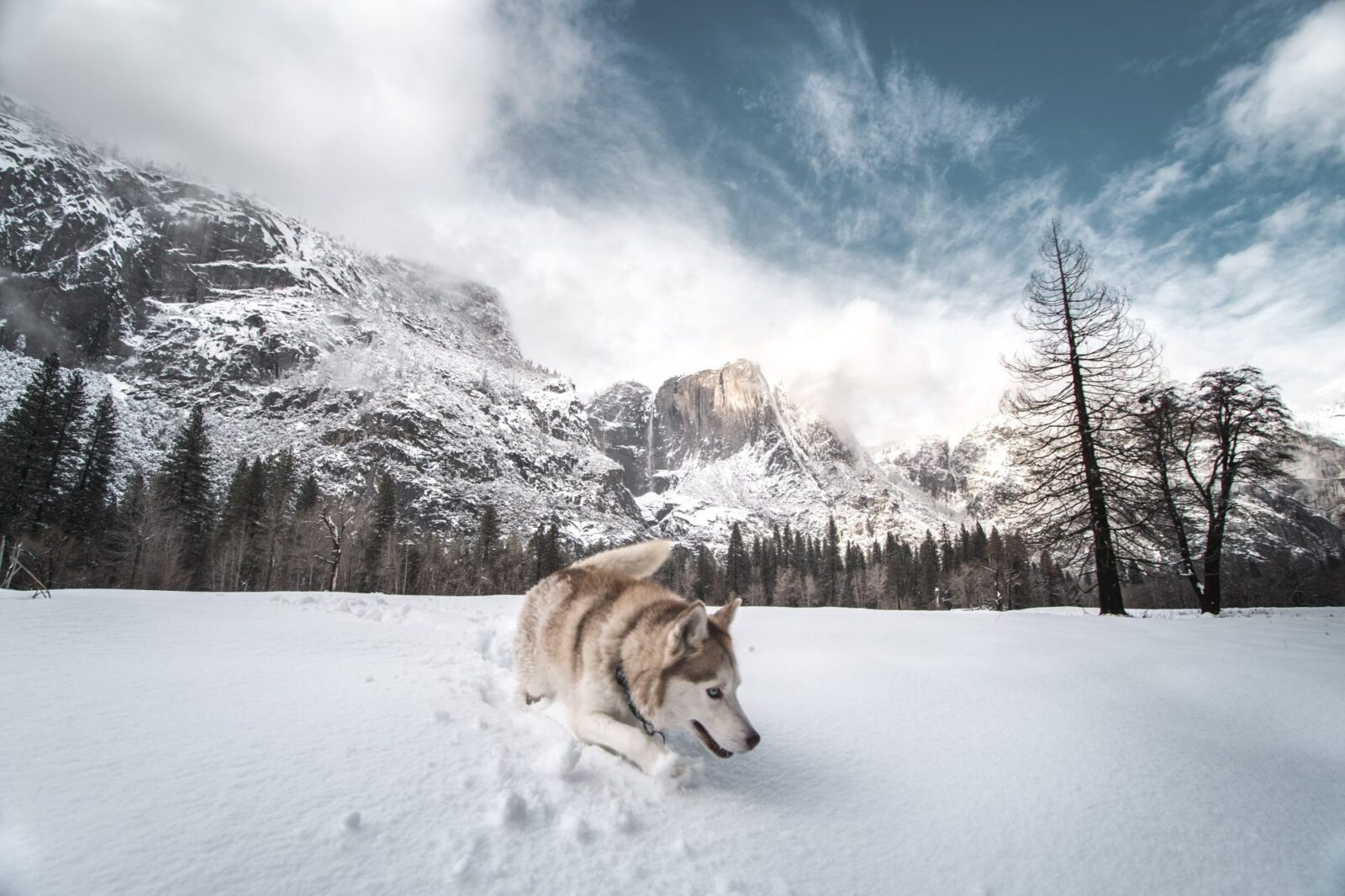 Get ready to take your pet abroad after Brexit is imposed. EU Regulations for travelling with your dog if we have a 'No Deal Brexit'. Photo Unsplash Jeremy Bishop.