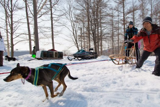 Dog sledging in Rusutsu. Rusutsu, the Japanese Resort joins the EPIC Pass for the 2019-20 ski season.