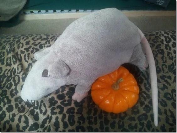 punkin mouse