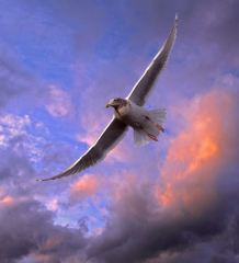 De betekenis van vogels in het kaartleggen met de tarot