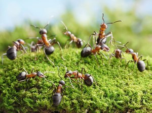 Ant Network
