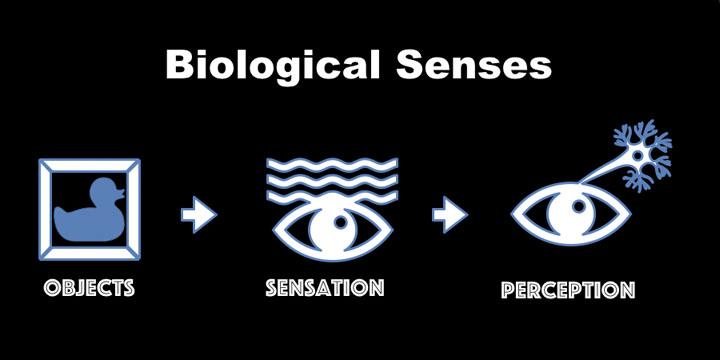 Biological Sensors