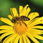 Beautiful Bees and Their Vital Role