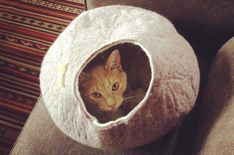 lost weight - Dave the cat in a nest