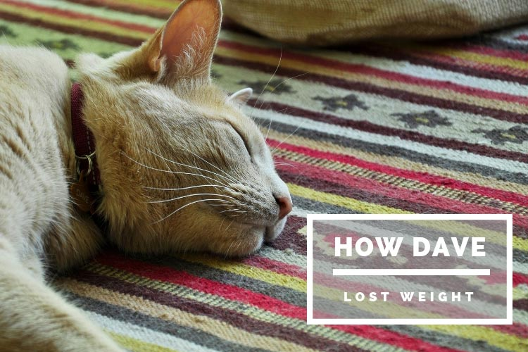 lost weight - How Dave the Cat Lost Weight