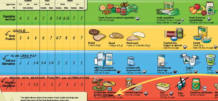 The size of the coloured bars for fruits and vegetables and (whole) grains should be approximately 3 1/2 and 3 times larger