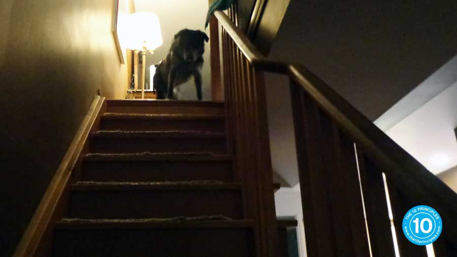 When he looks at the whole stair case it takes him ages to be assisted down