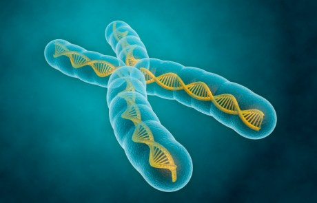 Chromosomes hold the key to life!