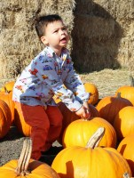 Tucker in the Pumpkin Patch 2