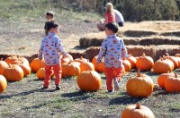 Woodies and the Pumpkins 2