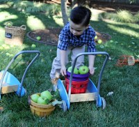 Tucker loading cart with apples