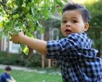 Tucker picking apple 2
