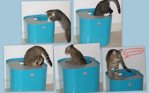 KatzenWC in 2 Minuten