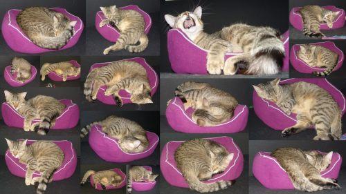 Schlafstudien eines Katers (Jasper)
