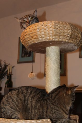the3cats_2013_02_13_9616