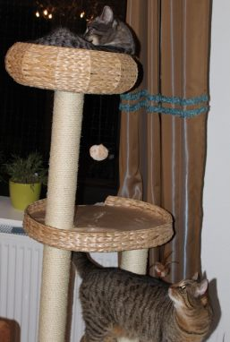 the3cats_2013_02_13_9663