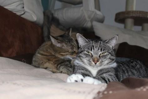 bthe3cats_2013_04_22_3249