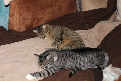 bthe3cats_2013_04_22_3259