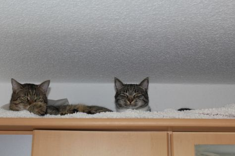 the3cats_2013_04_20_3033b
