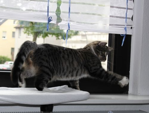 _the3cats_2013_07_20_8428