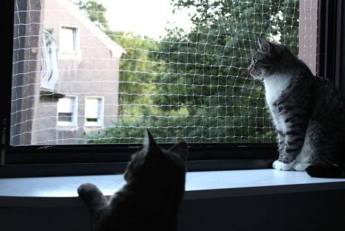 _the3cats_2013_07_26_9578