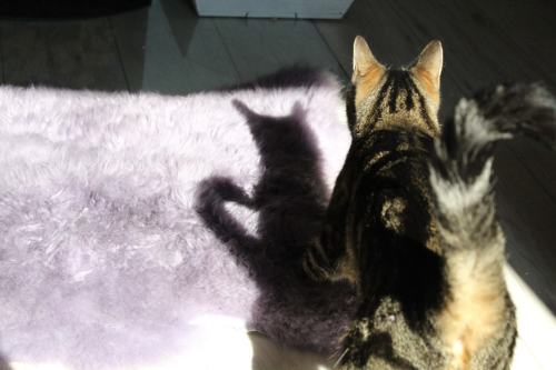 _the3cats_2013_09_30_3375