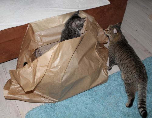 _the3cats_2013_10_18_6678