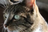 _the3cats_2013_10_19_7346