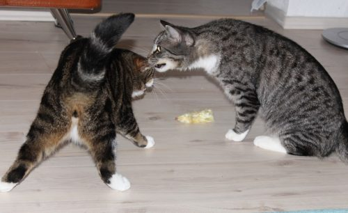 the3cats_2013_10_29_8808