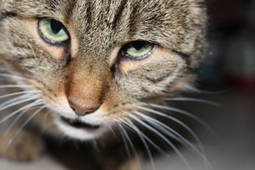 _the3cats_2013_12_07_3711