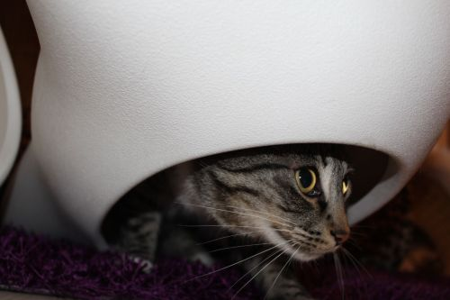 _the3cats_2013_12_09_4400