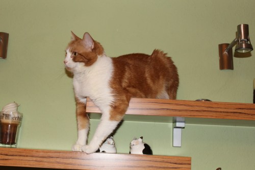 _the3cats_2013_12_14_4983