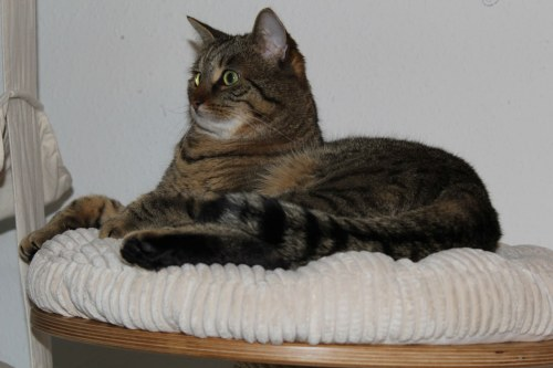 _the3cats_2013_12_24_6710