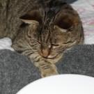 Jasper & Linus: Katzenbett Häkelfilzen – Das Ende
