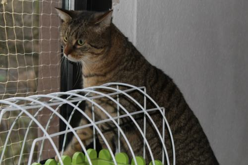 _the3cats_2014_01_18_9572