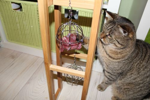 _the3cats_2014_01_22_9700