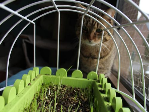 _the3cats_2014_01_25_9836