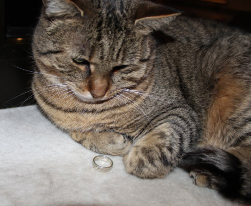 _the3cats_2014_03_04_1533